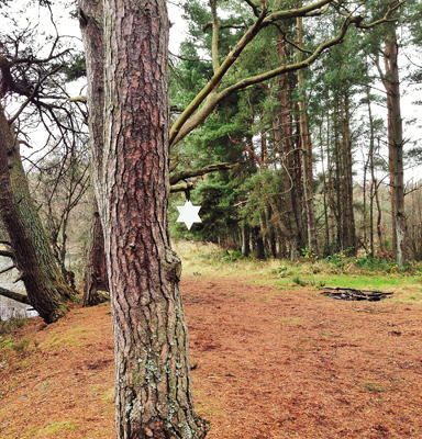 16. Dec - Ingrid Gordon, Devilla Forest, Fife