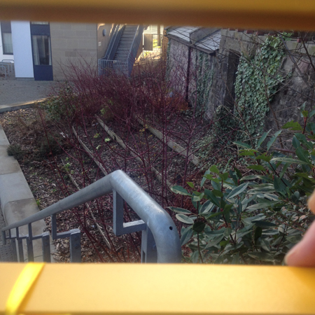 Perfect little terraced vegetable garden for students